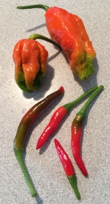 Ghost and Thai peppers